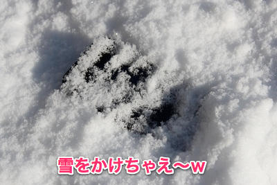 20121230_lifep102
